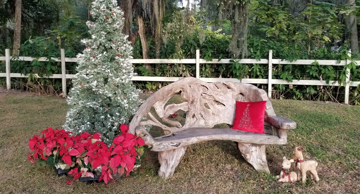 Three Seasons Nursery, Palmetto Florida, Christmas bench backdrop